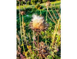 naravno-milo-zelisca-cvetka