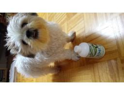 šampon za pse naravni