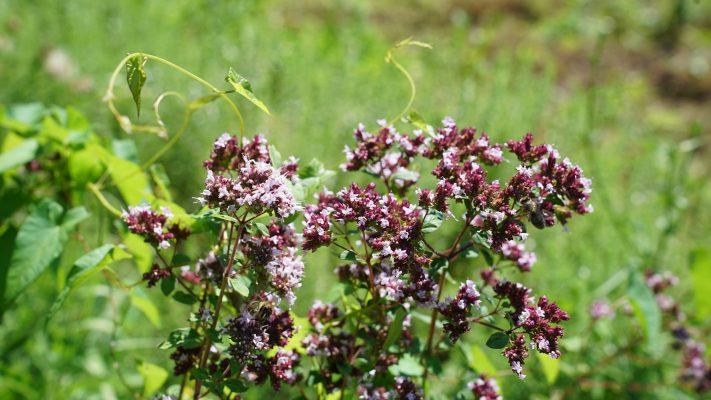 Shranjevanje semen rastlin